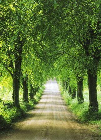 2006-3-8-tree-path